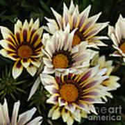 Flowers Of New Zealand 2 Art Print