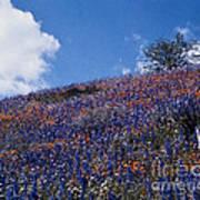 Flowers On A Hill Art Print