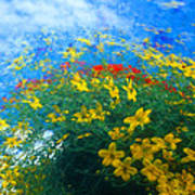 Flowery Sky Art Print