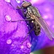Fly In The Rain Art Print