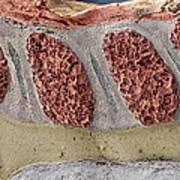 Foetal Spinal Column Art Print