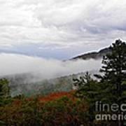 Fog And Foliage Art Print