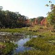 foliage in the swamp lands of CT Art Print