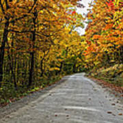 Follow The Yellow Leafed Road Art Print