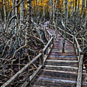 Footpath In Mangrove Forest Art Print by Adrian Evans