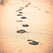 Footprints In Sand Art Print by Paul Velgos