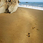 Footprints In The Sand Art Print