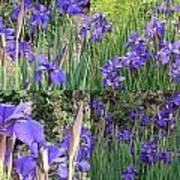 for Iris Art Print