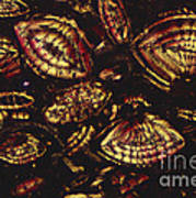 Foraminiferous Limestone Lm Art Print
