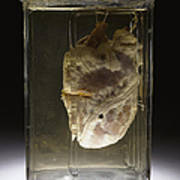 Forensic Evidence, Heart Perforated Art Print by Science Source