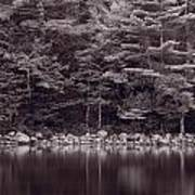 Forest At Jordan Pond Acadia Bw Art Print