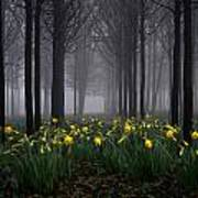 Forest Daffodils Art Print