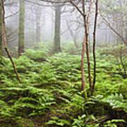 Forest Ferns On A Foggy Morning Art Print