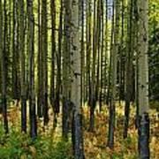 Forest Floor In Autumn, Bow Valley Art Print