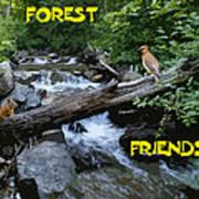 Forest Friends Sharing A Log Over A Creek On Mt Spokane Art Print