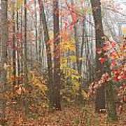Forest In Late Autumn Art Print