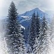Forest In The Winter Art Print