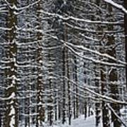 Forest Of Marburg In Winter Art Print