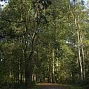 Forest Path 1 Art Print