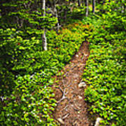 Forest Path In Newfoundland Art Print by Elena Elisseeva