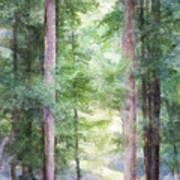 Forest Pathway Art Print
