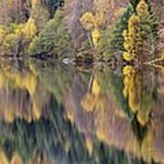 Forest Reflected In A Loch Art Print