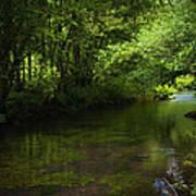 Forest River Art Print