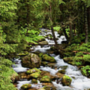 Forest Stream In Tatra Mountains Art Print