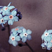 Forget Me Not 01 - S05dt01 Art Print
