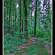 Forrest Trail Art Print