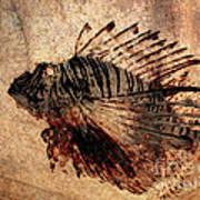Fossil Art Print