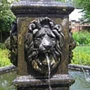 Fountain Lion Art Print