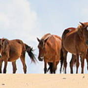 Four Wild Mustangs Art Print