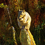 Fox Squirrel Sitting On Cypress Knee Art Print