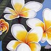 Frangipani I Art Print