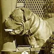 Frank The Dog 7827 In Sepia Art Print