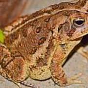 Freddie The Frog Art Print