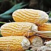 Fresh Corn Art Print