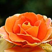 Fresh Peach Petals Art Print