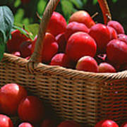 Fresh Red Plums In The Basket Art Print