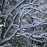 Fresh Snowfall Blankets Tree Branches Art Print