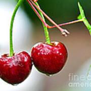 Fresh Wet Cherries Art Print