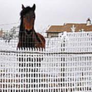 Friendly Horse Art Print