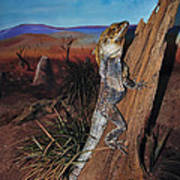 Frill-necked Lizard Art Print