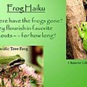 Frog Haiku Art Print by Laurel Talabere