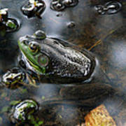 Frog In The Millpond Art Print
