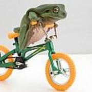 Frog On A Bicycle Art Print