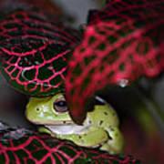Frog On A Leaf Art Print