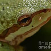 Frog Skin Art Print
