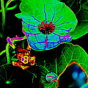 From The Psychedelic Garden Art Print